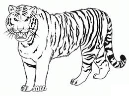 printable Tiger coloring pages ideas for preschool