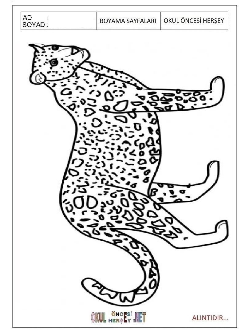 printable jaguar coloring pages for preschool