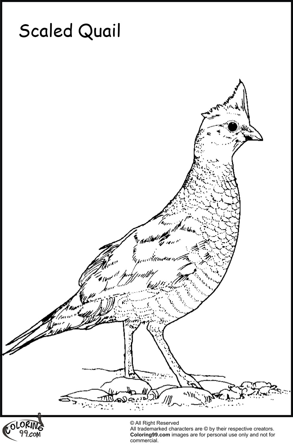Quail Coloring Pages for Preschool