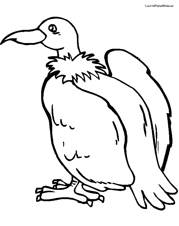 vulture-coloring-pages-for-kids