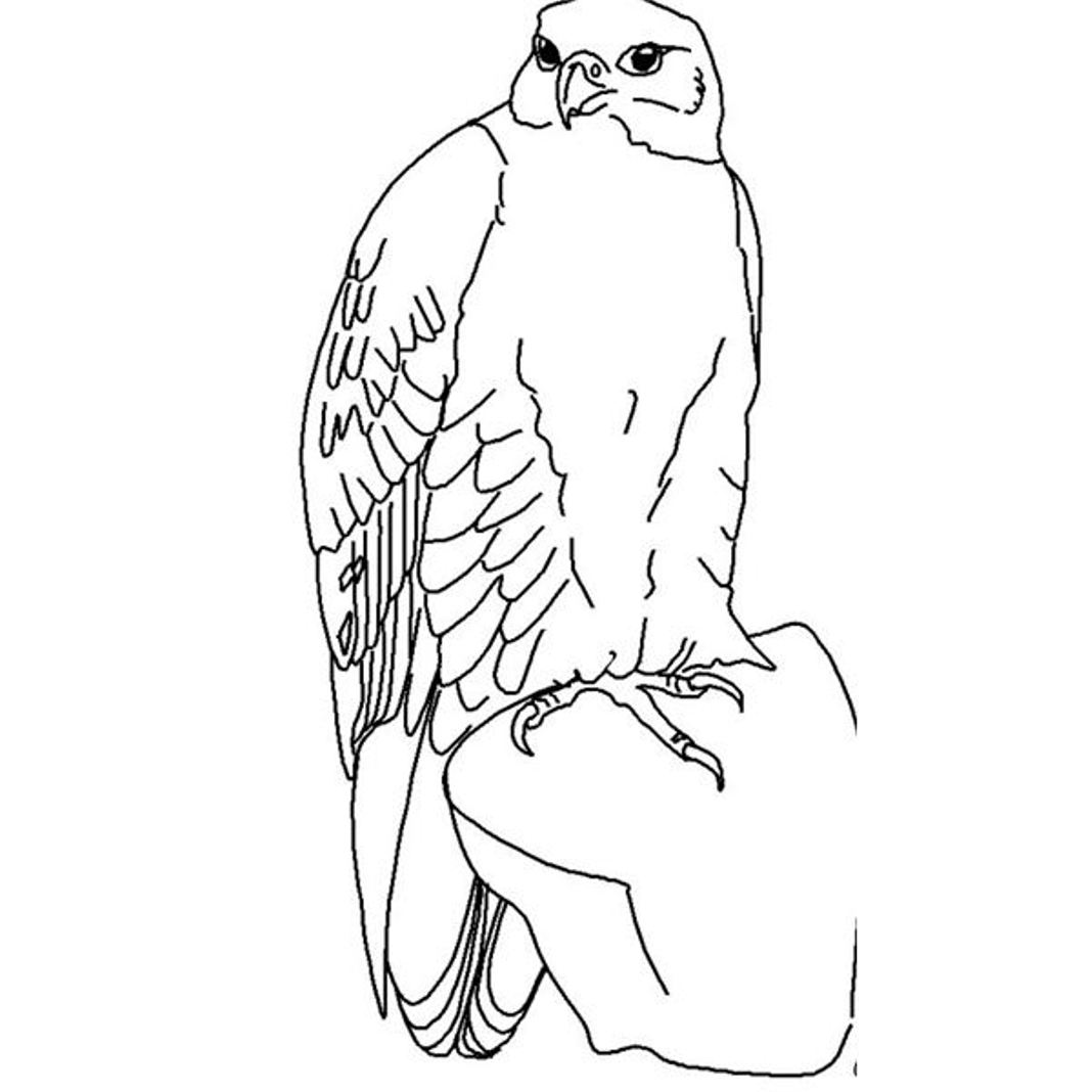 free wild birds coloring pages - photo#17