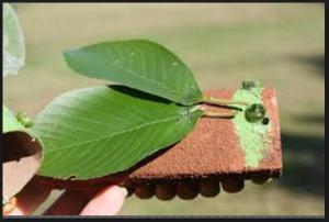 Cicada craft idea for kids