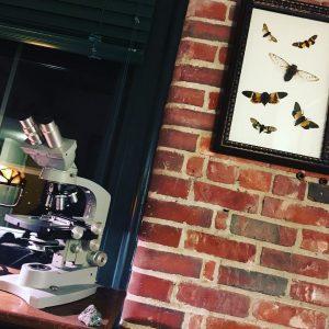 free cicadas crafts idea for kids