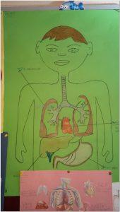 human bodies bulletin board