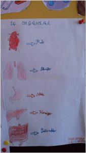 human bodies bulletin board idea for kindergarten