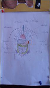 human bodies bulletin board idea for preschool