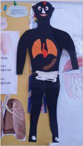 human-bodies bulletin-board ideas