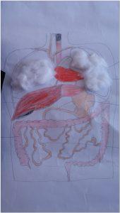 human-bodies-bulletin board ideas