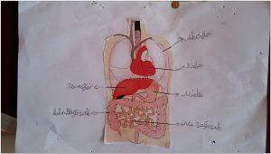 human bodies bulletin board ideas