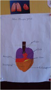 human bodies bulletin board ideas for preschool