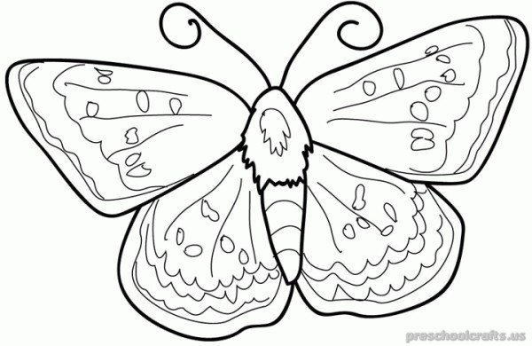 freeprintable animals butterfly coloring pages for first