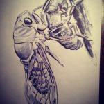 cicada-art activities