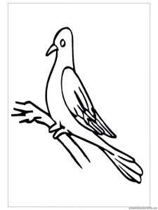 swallow coloring pages for child