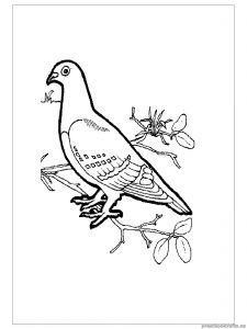 swallow coloring pages for kid