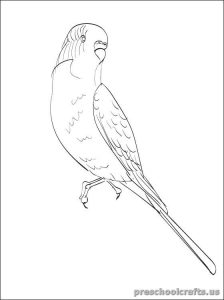 swallow printable coloring pages for kid