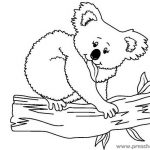 koala-coloring-pages