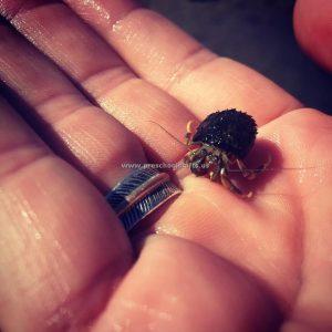 crab-photo