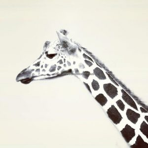 giraffe-craft-ideas-for-kid