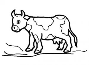 cow coloring pages for kindergarten and preschool