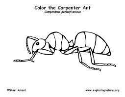 Ant coloring page for kids
