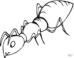 Ant colouring pages for preschool