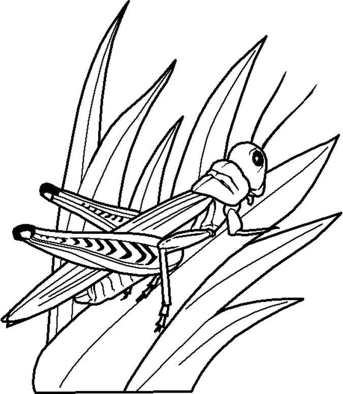 Coloring-Pages-of-grasshopper