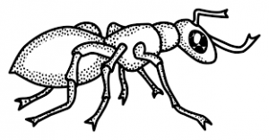Download free printable Ant coloring page