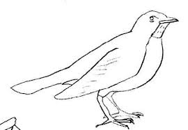 Free canary coloring pages for preschool