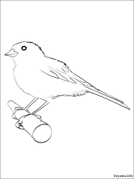 Free printable canary coloring pages for preschool