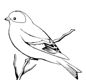 Free printable canary colouring