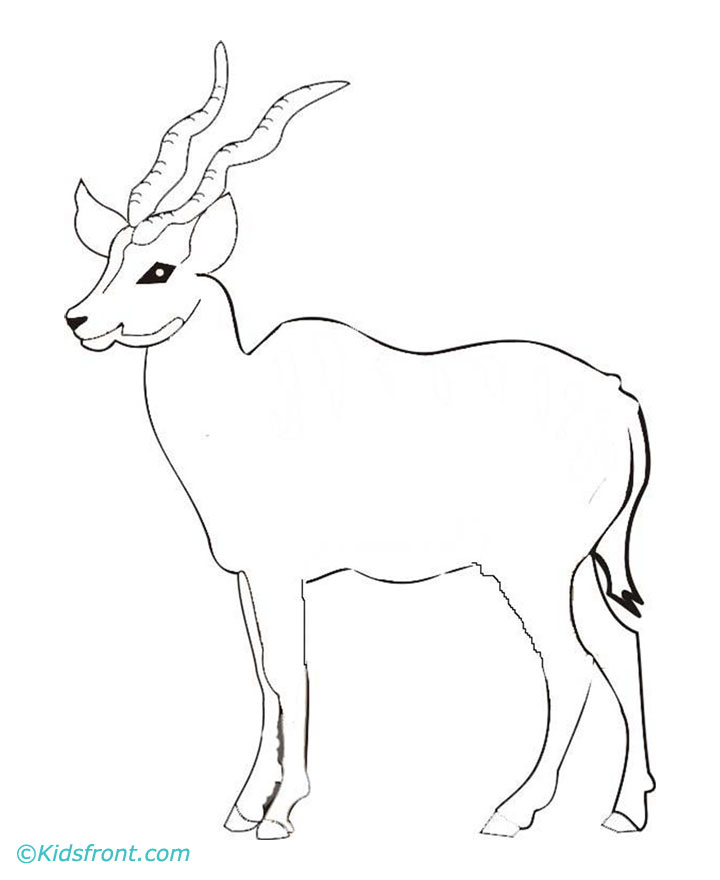 Gazelle Coloring Pages - Kidsuki