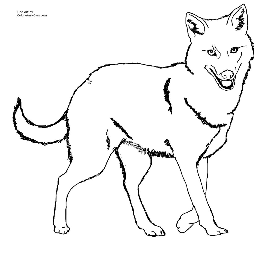 Indian-jackal-coloring-pages