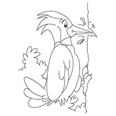 Northern-Flicker-coloring-pages