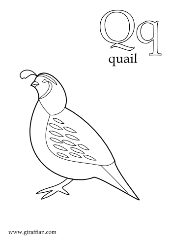 Quail-printable-coloring-pages-for-preschool