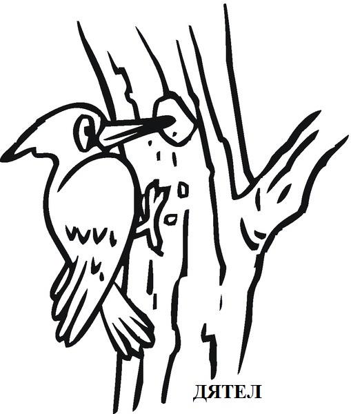 Woodpeckercolouringpages