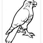 animal related coloring pages