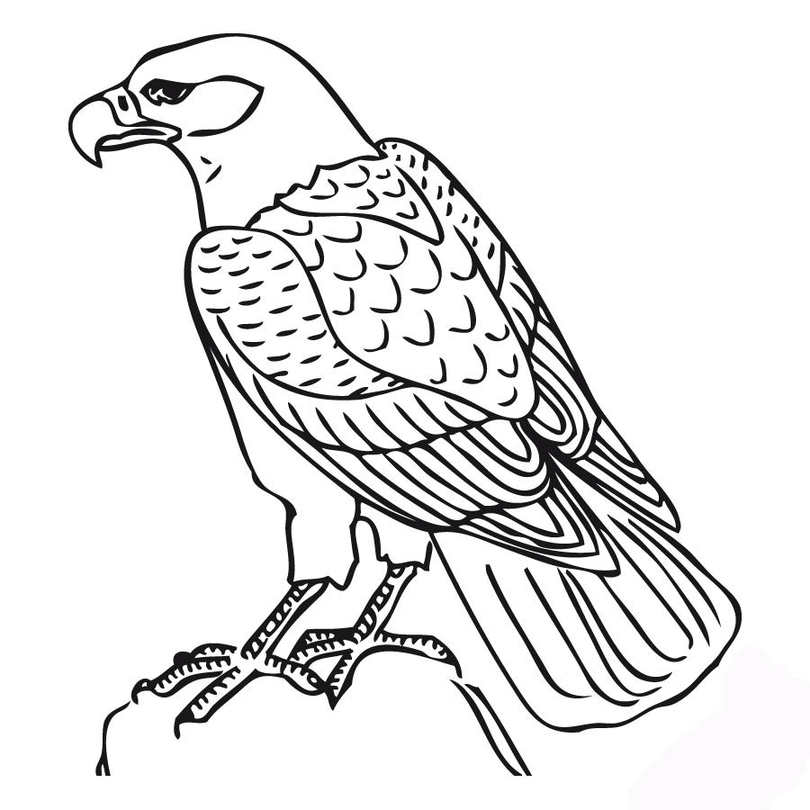 animals-doğan-printable-coloring-pages-for-preschool