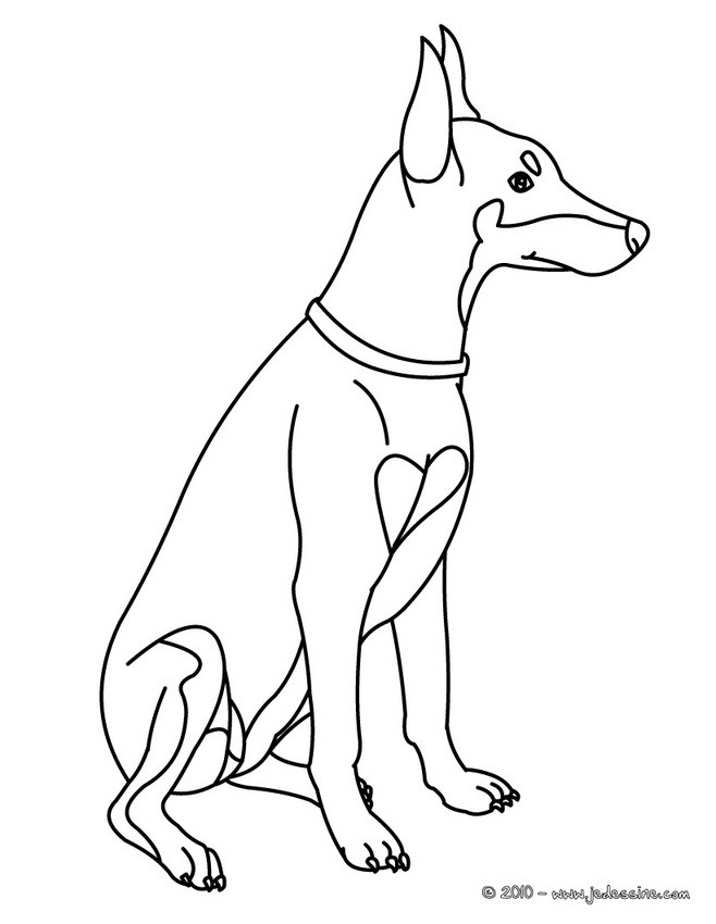 Doberman Colouring Pages