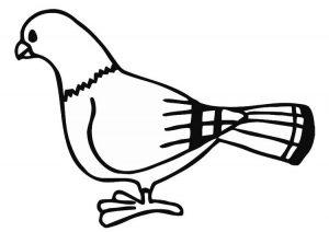 Pigeon Colouring worksheet
