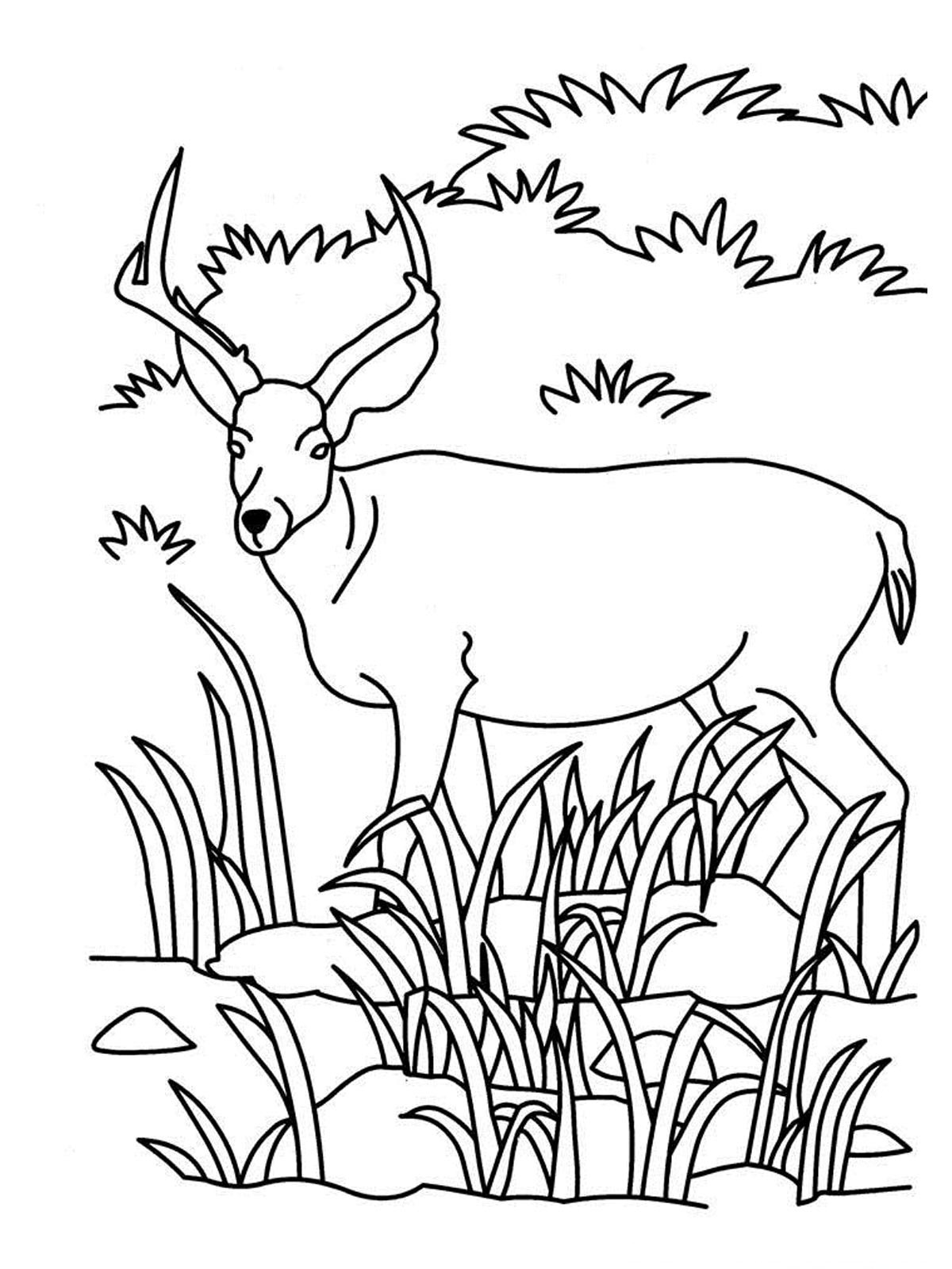 antelope-colouring-page