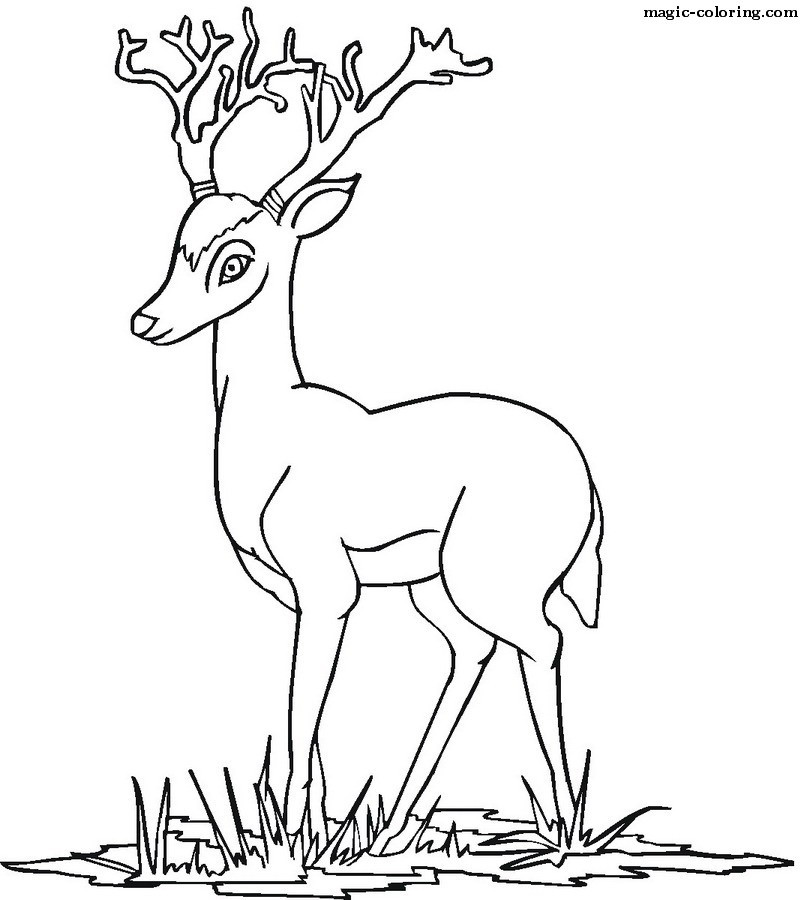 antelopes_coloring_pages
