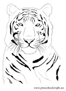 beatiful tiger coloring pages for preschool