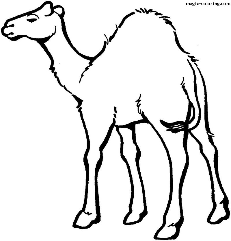 camels_coloring_pages