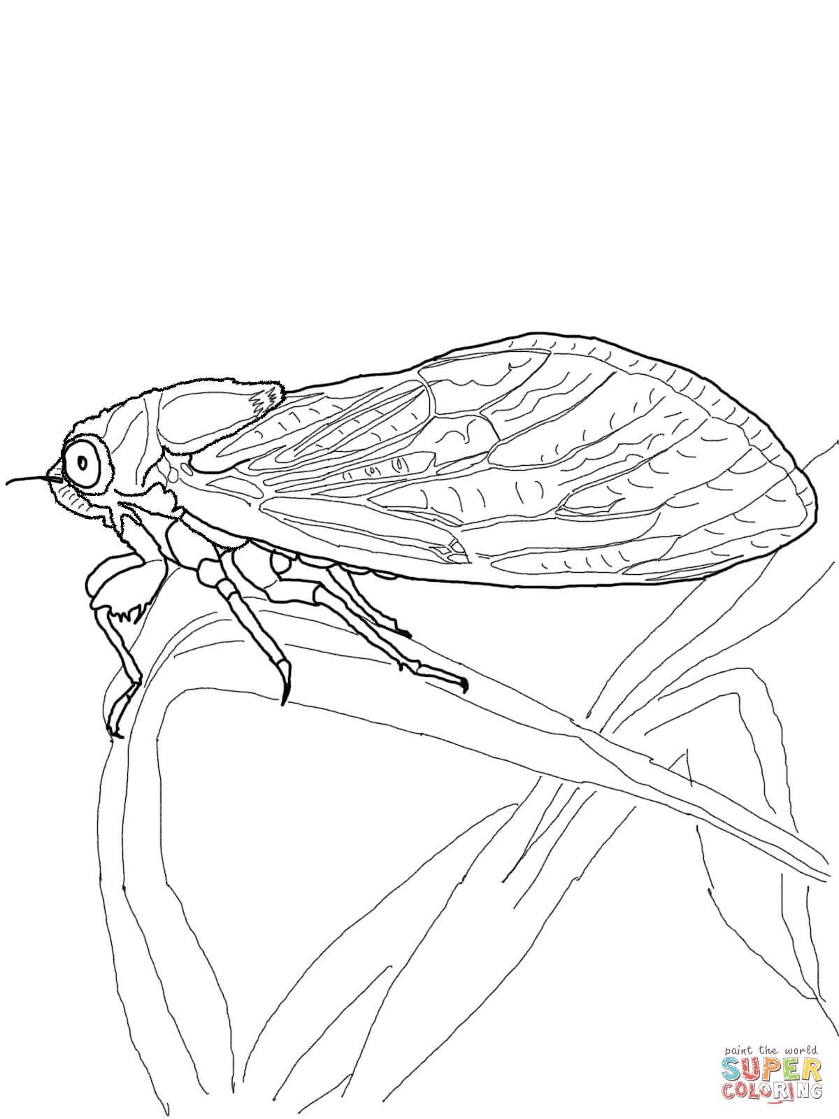 cicada-coloring-page