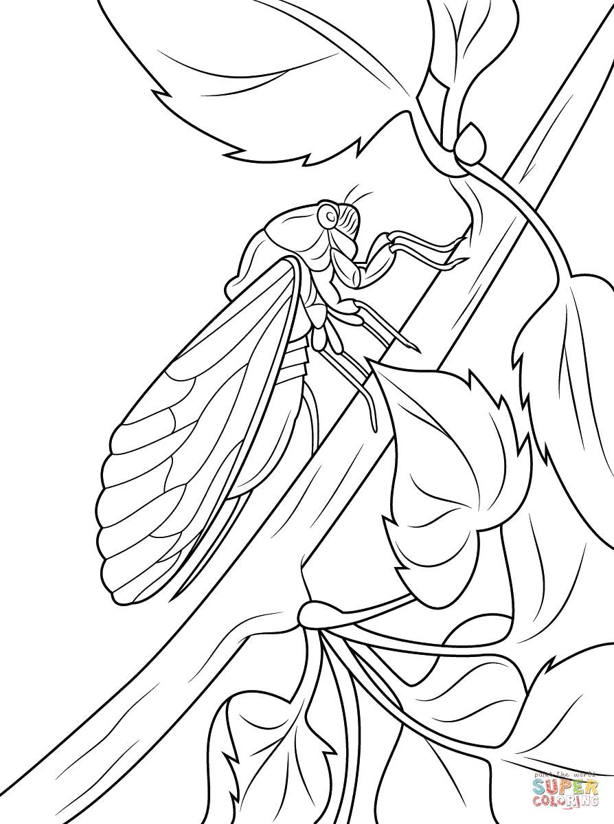 cicada-coloring-pages