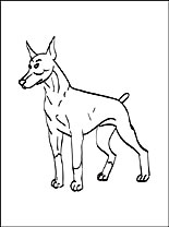 doberman-pinscher-colouring
