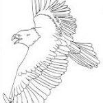 eagle coloring pages for kindergarten