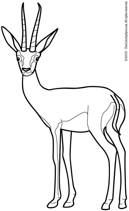 free-Gazelle-printable-coloring-pages-preschool