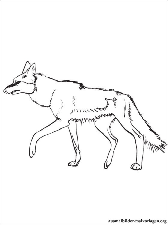 free-Jackal-printable-coloring-pages-for-preschool