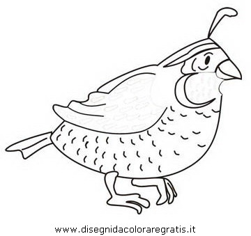 free-Quail-printable-coloring-pages-for-preschool